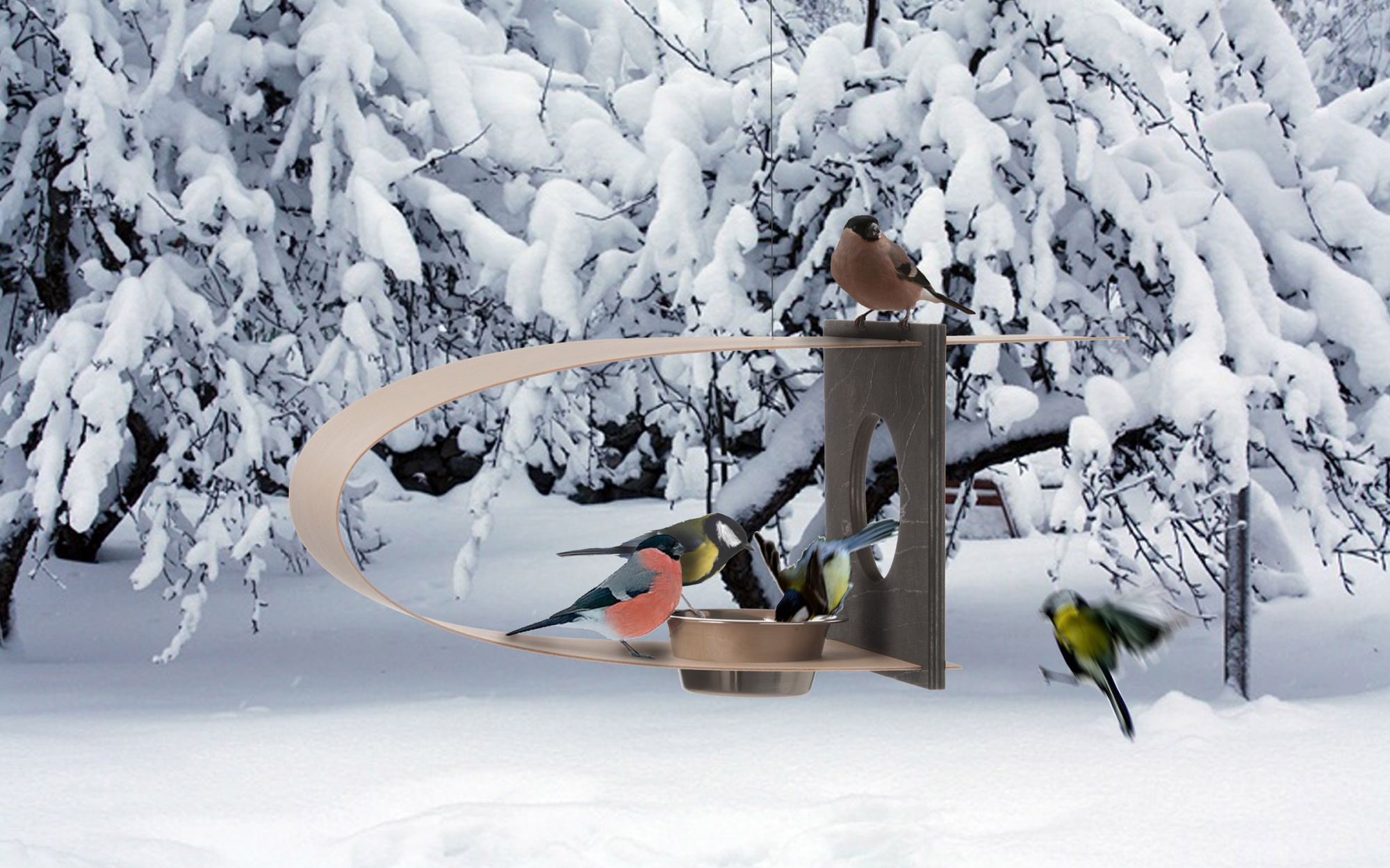 BirdFeeder-Koto-winter